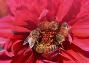 bees performance enhancement nectar flower