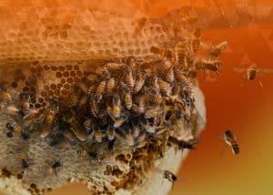 digital disruption bees swarm honeycomb