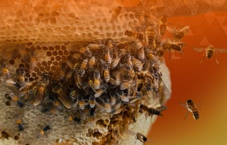 digital disruption bees swarm honeycomb